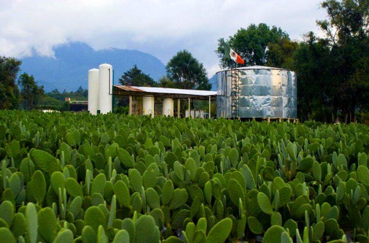 fuente de biomasa