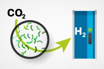 bacteria que transforma el CO2