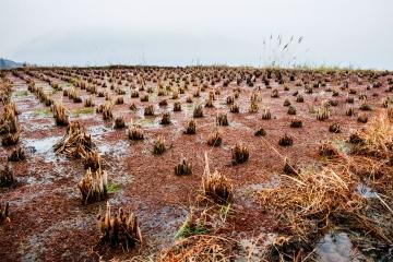 biomasa afecta la alimentación