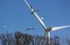 turbinas eólicas aves